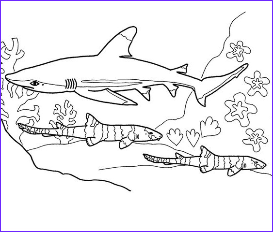 Shark Coloring Book Beautiful Collection Shark Coloring Pages 15 Diy S Pinterest