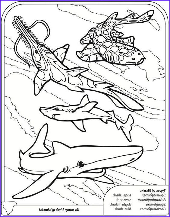 Shark Coloring Book Elegant Photos Sharks Coloring Book Dover Publications