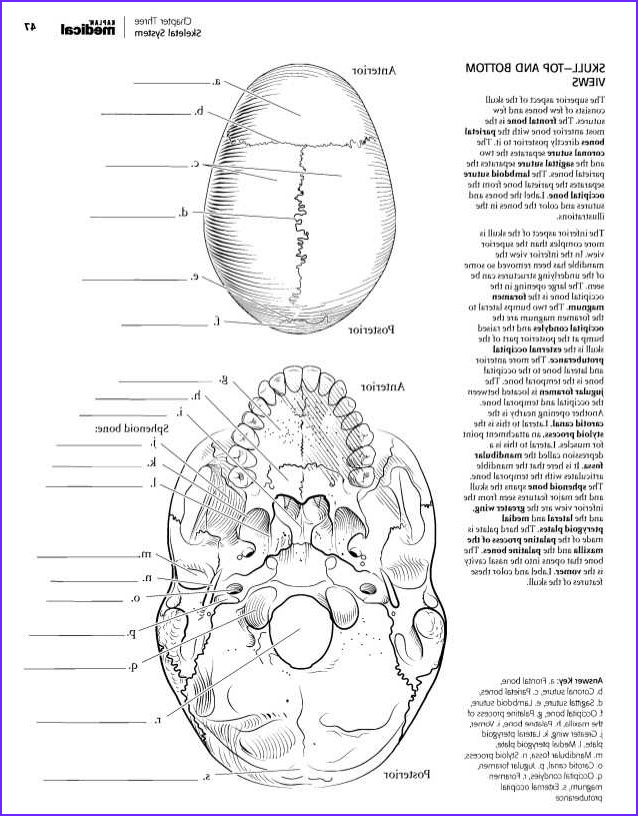 Skeletal System Coloring Pages Awesome Images 82 Fresh Skeletal System Coloring Pages Image