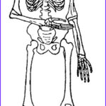 Skeletal System Coloring Pages Beautiful Collection 53 Skeletal System Coloring Pages Anatomy Coloring Pages