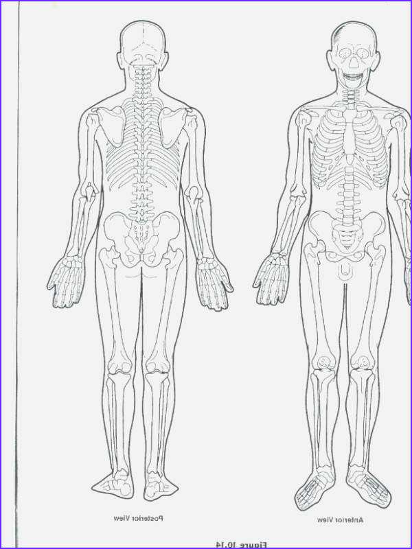 Skeletal System Coloring Pages Beautiful Photos 82 Fresh Skeletal System Coloring Pages Image