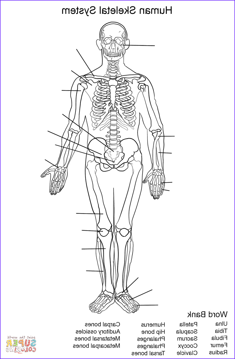Skeletal System Coloring Pages Cool Image Human Skeletal System Worksheet Coloring Page