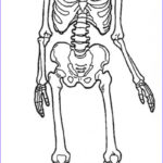 Skeletal System Coloring Pages Inspirational Photography Anatomy Skeleton Drawing At Getdrawings