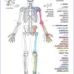 Skeletal System Coloring Pages New Photos Classical Conversations Cycle 3 Practical Family