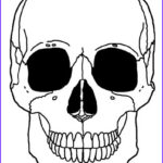 Skeleton Coloring Awesome Photos Printable Skeleton Coloring Pages for Kids