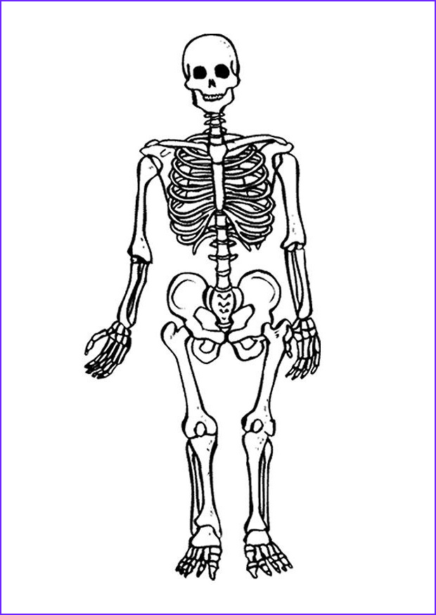 Skeleton Coloring Pages Cool Stock Free Printable Skeleton Coloring Pages for Kids