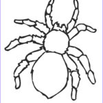 Spider Coloring Awesome Photography Free Printable Spider Coloring Pages For Kids