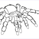 Spider Coloring Beautiful Images Free Printable Spider Coloring Pages For Kids