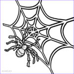 Spider Coloring Cool Photos Printable Spider Web Coloring Pages For Kids