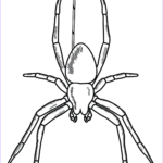 Spider Coloring Cool Photos Spider Coloring Page