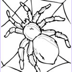 Spider Coloring Luxury Photography Realistic Insect Coloring Pages