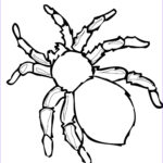 Spider Coloring New Photos Free Printable Spider Coloring Pages For Kids