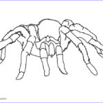 Spider Coloring Unique Photos Free Printable Spider Coloring Pages For Kids