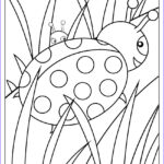 The Coloring Book Awesome Photos Ladybug Coloring Page Free Printable Coloring Book Page