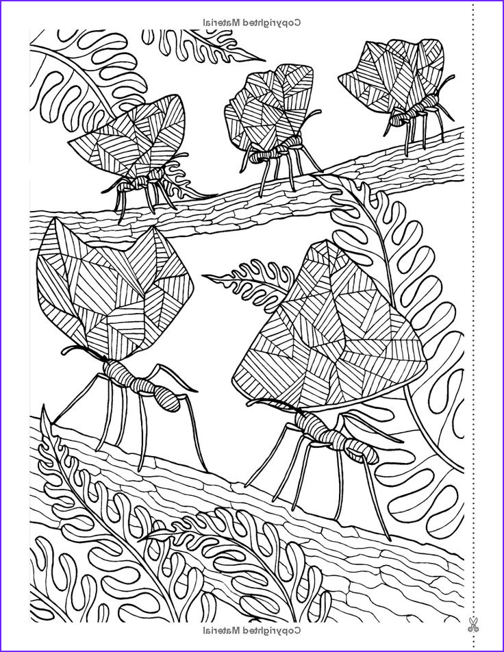 Therapy Coloring Books for Adults Best Of Images Secret Eden Anti Stress Art therapy Colouring Book
