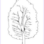 Tree Coloring Book Best Of Stock Free Printable Tree Coloring Pages For Kids