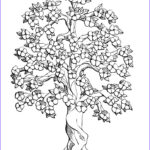 Tree Coloring Book Cool Stock Free Printable Tree Coloring Pages For Kids