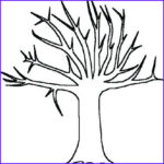Tree Without Leaves Coloring Page Beautiful Stock Tree Drawing Without Leaves At Getdrawings
