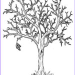 Tree Without Leaves Coloring Page Best Of Images Autumn Tree Without Leaves In Fall Leaf Coloring Page