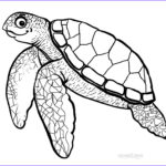 Turtle Coloring Book Beautiful Gallery Printable Sea Turtle Coloring Pages For Kids