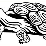 Turtle Coloring Book Beautiful Photos Free Printable Turtle Coloring Pages For Kids