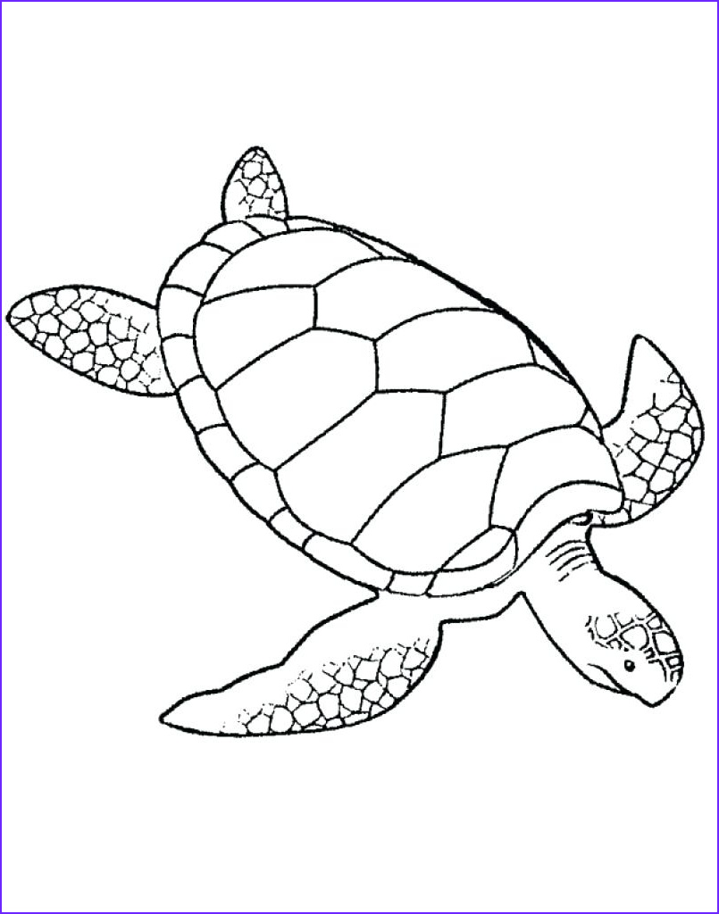 Turtle Coloring Book Best Of Collection Leatherback Sea Turtle Drawing at Getdrawings