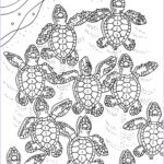 Turtle Coloring Book Cool Photography Baby Sea Turtles Coloring Page Embroidery Pattern Sea