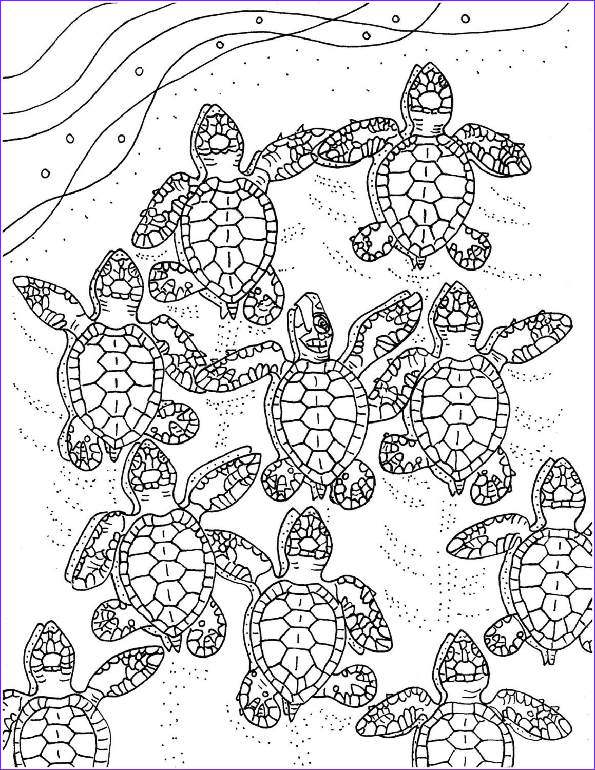 baby sea turtles coloring page