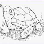 Turtle Coloring Book Cool Photos Coloring Pages Turtles Free Printable Coloring Pages