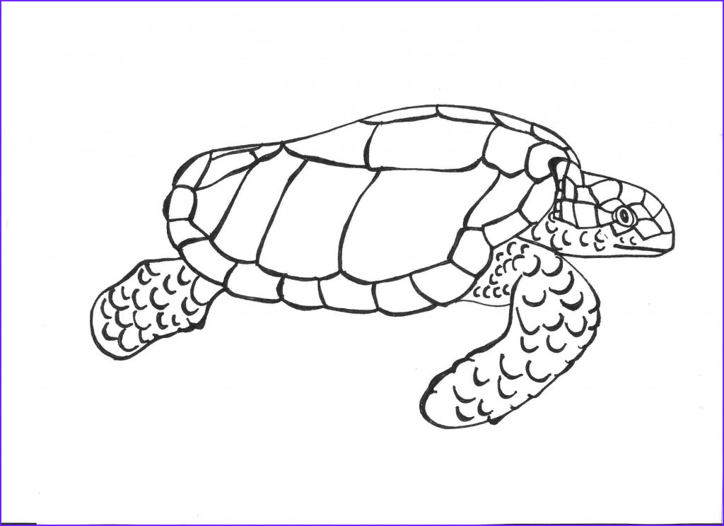 Turtle Coloring Books Beautiful Photos Free Printable Turtle Coloring Pages for Kids