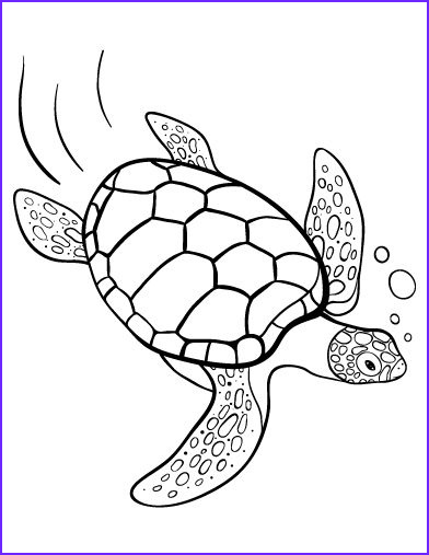 Turtle Coloring Books Elegant Images Printable Turtle Coloring Page Free Pdf at