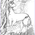 Unicorn Coloring Pages For Adults Luxury Gallery Unicorn Coloring Pages Coloringcks