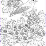 Unique Coloring Pages Luxury Photos Unique Spring & Easter Holiday Adult Coloring Pages