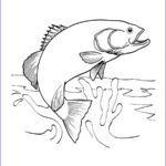 Water Coloring Book Inspirational Photos Salmon Jumping Out Of Water Coloring Page Google Search