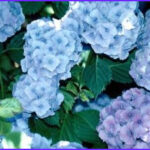 Why Do Flowers Change Color In Food Coloring Awesome Images Plants & Flowers That Change Colors Home Guides