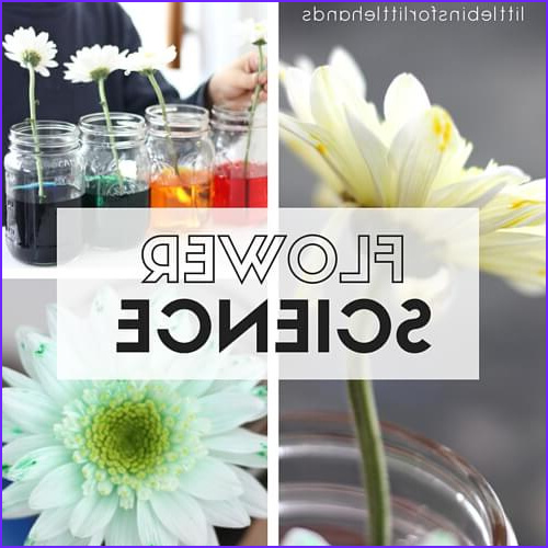 color changing flower science experiment