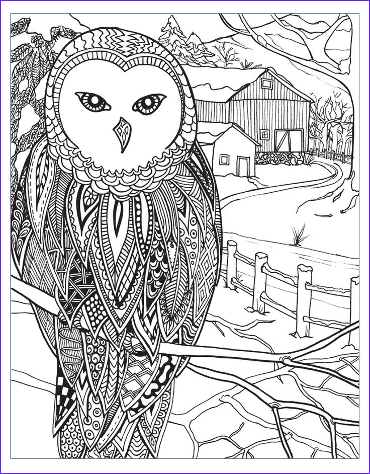 Winter Coloring Pages for Adults Cool Stock 1176 Best Images About Ö Adult Colouring Owls Birds