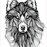Wolf Coloring Pages For Adults Elegant Photos Wolf 3 Wolves Adult Coloring Pages