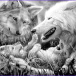 Wolf Coloring Pages For Adults New Photos 105 Beste Afbeeldingen Over Adult Coloring Pages Dogs