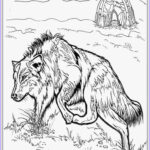 Wolf Coloring Pages For Adults Unique Photography Realistic Wolf Adult Coloring Pages
