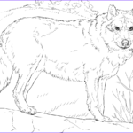 Wolf Coloring Pages Printable Best Of Image Grey Wolf Coloring Page