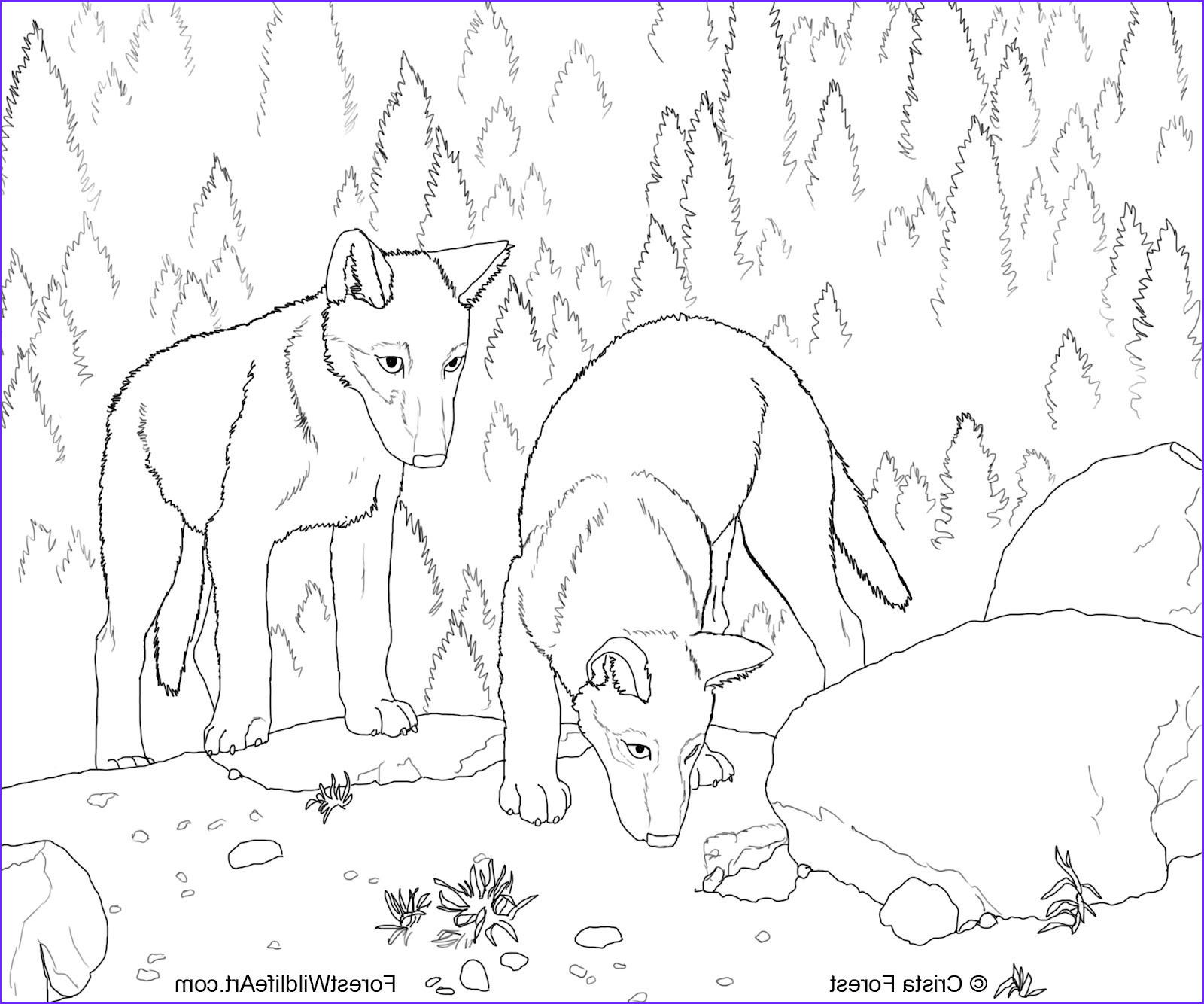 wolf pups coloring book page