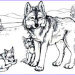Wolves Coloring Book Awesome Collection Wolf Coloring Pages Free Printable Warnai