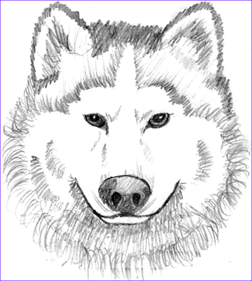Wolves Coloring Book Cool Collection Print & Download Wolf Coloring Pages theme