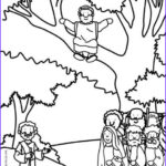Zaccheaus Coloring Page Inspirational Photos 112 Best Ideas About The Gospels Bible Teaching On