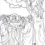 Zaccheaus Coloring Page New Image Jesus And Zacchaeus Coloring Pages Zacchaeus In A Tree
