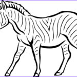 Zebra Coloring Pages Cool Collection 40 Zebra Templates Free Psd Vector Eps Png Format