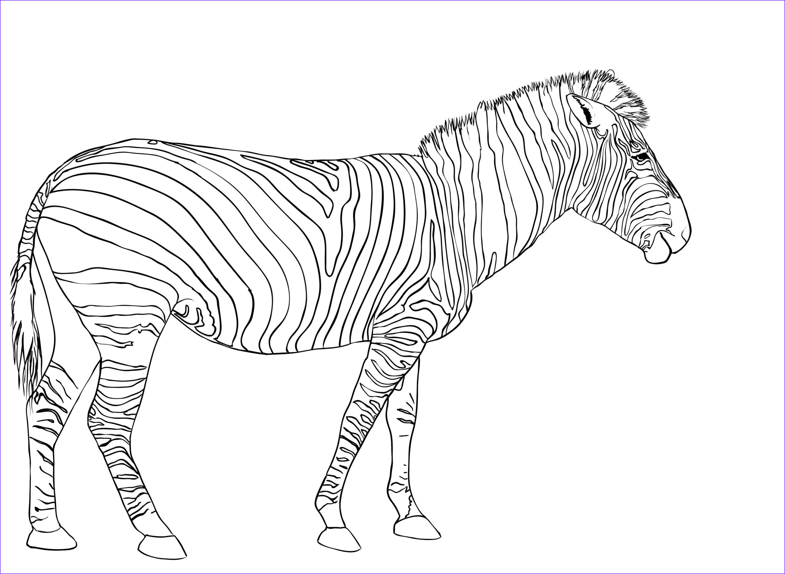 Zebra Coloring Pages Unique Gallery Free Printable Zebra Coloring Pages for Kids