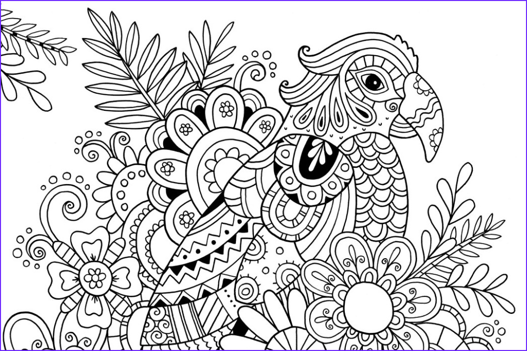 Zentangle Coloring Books Cool Gallery How to Draw Zentangle Patterns Hobbycraft Blog
