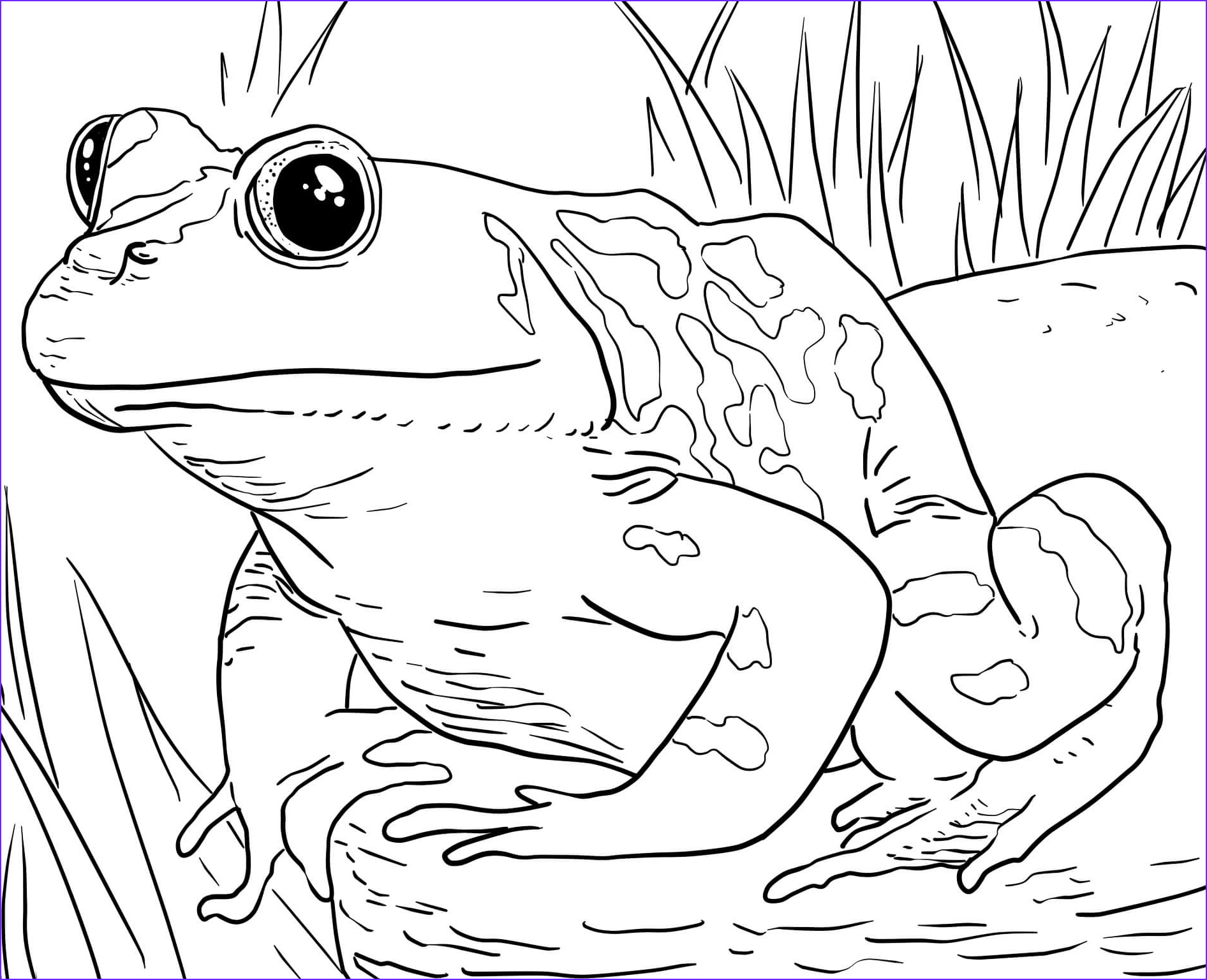 Zoo Animals Coloring Pages Inspirational Photography Zoo Animals Coloring Pages Best Coloring Pages for Kids